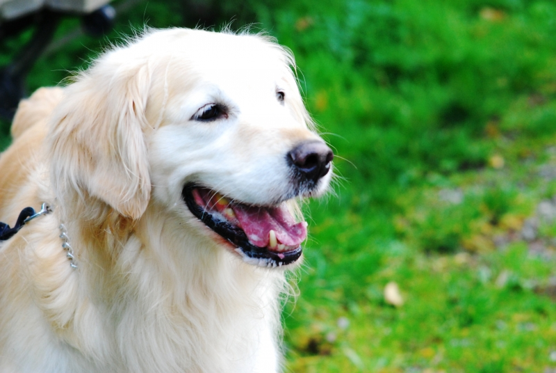 897613-happy-dog